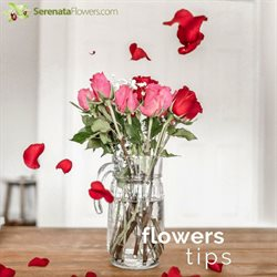 Serenata Flowers offers in the London catalogue