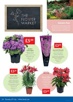 Flowers offers in the Lidl catalogue in London