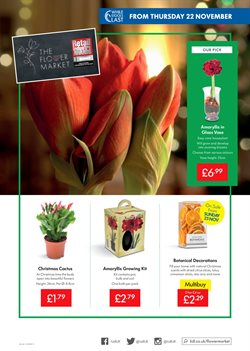 Flower offers in the Lidl catalogue in London