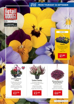Offers of Flower in Lidl