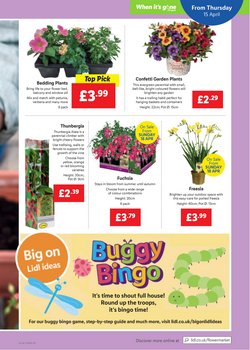 Offers of Flowers in Lidl