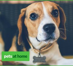 Pets at Home catalogue ( Expired )