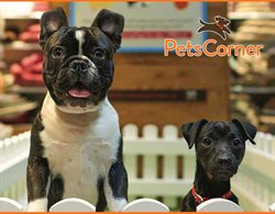Pets Corner offers in the London catalogue