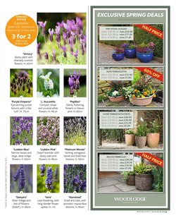 Offers of Flowers in Squires Garden Centres
