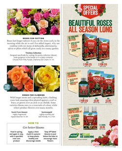 Offers of Roses in Squires Garden Centres