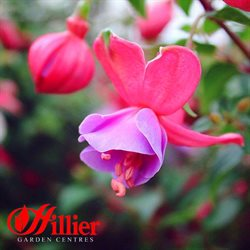Hillier Garden Centres offers in the Romsey catalogue