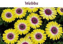 Webbs offers in the Webbs catalogue ( 15 days left)