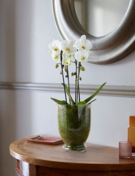 Luxury Orchid Glass offer at £50