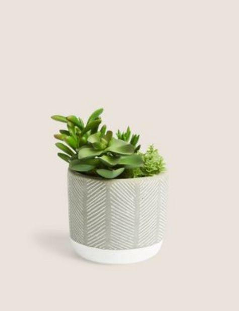 Artificial Succulent Garden offer at £9.5